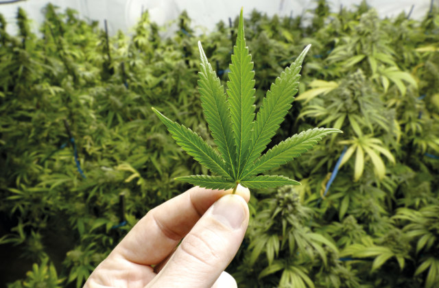 Karriere in der Cannabis-Industrie